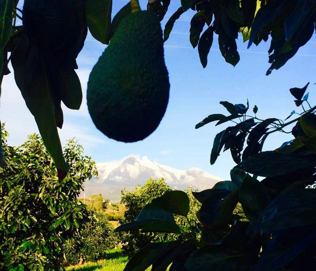 Etna Mango: il mango siciliano